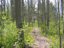 harkins trail 5-19-05_102_thumb