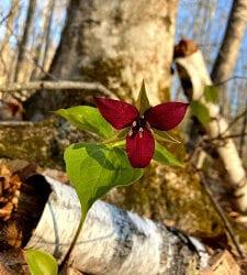 Signs of Spring on ALT Lands